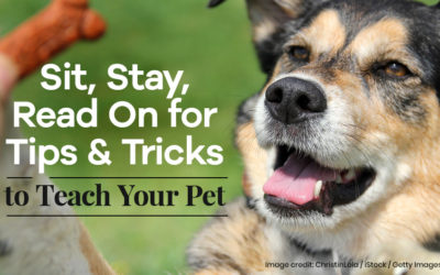 Sit, Stay, Read On for Tips and Tricks to Teach Your Pet