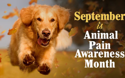 September is Animal Pain Awareness Month