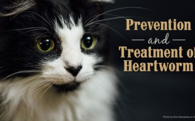 Prevention and Treatment of Heartworm Infection